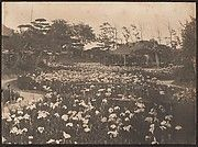 [Garden with Field of Flowers] ca. 1900-1910, Adolfo de Meyer (American b. France 1868-1949, L.A. Calf.) gelatin silver print.