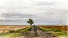 The faster I go, the quieter still seems.  Still by CarlaDyck, $75.00