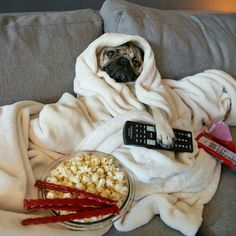 Pug : why can't I do the same thing you do all the time ???  Me : yup that's me .