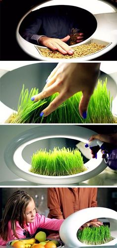 The Grasslamp is a simple and attractive table or countertop lamp, that lets you grow your own micro-greens like wheatgrass, using just water and LED lighting.