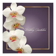 DealsPixDezines orchids/phalaenopsis AnnouncementWe have the best promotion for you and if you are interested in the related item or need more information reviews from the x customer who are own of them before please follow the link to see fully reviews