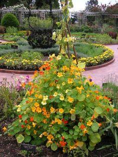 Jardim de Especiarias, ervas medicinais, e perfume