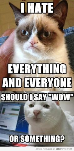 Serious cat is not impressed. Grumpy Cat Quotes, Grumpy Cat Humor, Cat Memes, Funny Memes, Hilarious, Grumpy Kitty, Funny Animal Pictures, Funny Photos, Best Funny Pictures