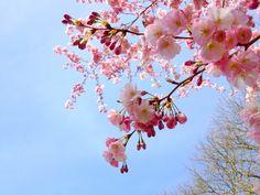 Erotik Gedichte von Liebe & Leben - Die Liebe gleicht dem April von Emanuel Geibel  http://blog.aus-liebe.net/gedichte-von-liebe-leben-die-liebe-gleicht-dem-april-von-emanuel-geibel/  #April #EmanuelGeibel #Frühling #Gedichte #Liebe #Liebesgedichte