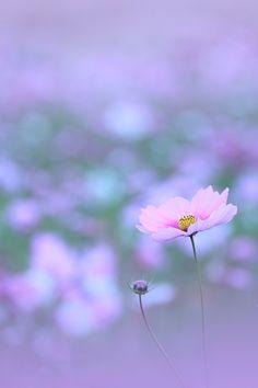 Anemone by Chishou Nakada