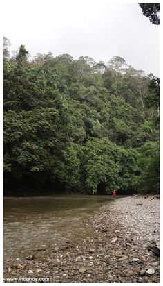 Tekelan river bank to camping ground. Betung Kerihun National Park, West Borneo