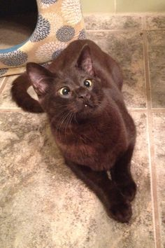 You know you want to adopt this adorable and ridiculous cross-eyed kitty!