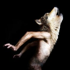 wolf Francesco Sambo - a brilliant digital artist who combines photographs of animals and humans to create these strikingly beautiful images. Magritte, Dark Fantasy, Fantasy Art, Vampires, Potnia Theron, Daughter Of Smoke And Bone, She Wolf, Animal Heads, Pics Art