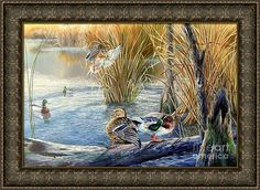 Northern Mallards Framed Print featuring the painting Evening Solitude- Northern Mallards by Daniel Butler