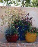 Bunu Okuyan Bitirmeden Sözlenmiş - Sevgi ve Muhabbet için Dualar - Estanbul.com Profile, Plants, Istanbul, User Profile, Plant, Planting, Planets