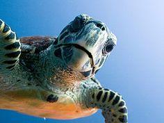 Flora y fauna de Maldivas - Biodiversidad de las islas y sus aguas