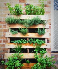 Herb Garden Ideas For A Balcony mini-pallet herb garden. just trim to the size you want. hang it