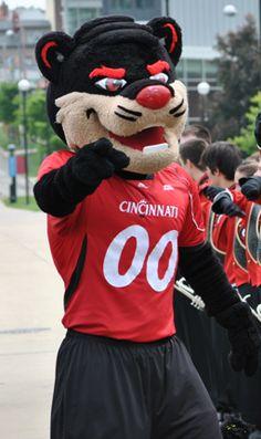 20 University Of Cincinnati Bearcats Ideas Cincinnati Bearcats University Of Cincinnati Bearcats