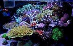 Reef+tank - zeovit reef tank