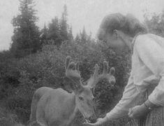 Sylvia Plath feeding a deer, Algonquin Provincial Park, Ontario, Canada, July 1959