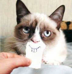 Grumpy Cat - not so grumpy
