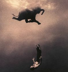 Gregory Colbert : Ashes and Snow