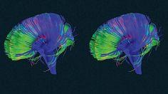 Votre cerveau possède un bouton 'supprimer'. Et voici comment l'utiliser.
