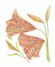 Consider the lilies of the field.....                                                                                                                                                                                 More