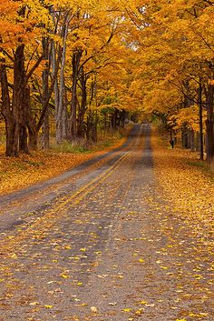 Fall Rural Country Road with Autumn Colored Leaves in Southwest Michigan - A Autumn Nature Landscape Photograph October Country, Autumn Scenes, Autumn Aesthetic, Autumn Nature, Landscape Photographers, Beautiful Landscapes, Nature Photography, Beautiful Places, Scenery