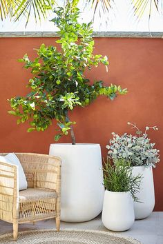 gardens patio Moderno/ARD Gavitella Grey A collaboration between Adam Robinson and Garden Life - Moderno Gavitella pot available in grey and white. Diy Patio, Backyard Patio, Patio Ideas, Porch Ideas, Backyard Ideas, Terrace Garden, Garden Pots, Balcony Gardening, Garden Trees