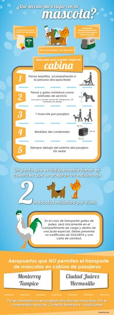 ¿Qué necesitas para viajar con tu mascota? Mascotas a bordo en Interjet #BlogInterjet @TravelGroup_CO