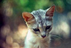 ラブリー-KittyCats、photogenicfelines:(ナタリアRomanova)