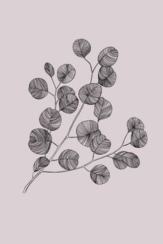 Illustration & Design by Montreal based Illustrator/Artist, Jodi Tellier. Floral Patterns & Drawings, Botanical Illustrations, Decorative Artwork available for licensing. Leaves Illustration, Botanical Illustration, Drawing Sketches, Art Drawings, Flower Sketches, Disney Drawings, Stylo Art, Blatt Tattoos, Gravure Illustration