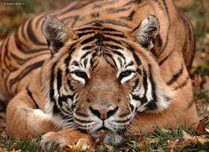 Port Lympne Wild Animal & Safari Park, Kent - DayTripFinder