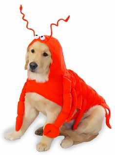 Lobstah! Casual Canine Lobster is great for dress-up, parties, photo opportunities, or get togethers. It's fun and irresistibly cute! #dogs #halloween