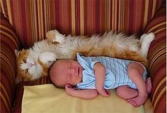 Gatos perceptivos