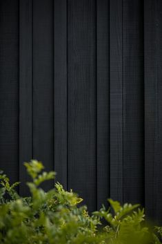 Timber Cladding, Exterior Cladding, Black Exterior, Exterior Design, Timber Fencing, Timber Screens, Wood Images, Landscape Materials, Garden Studio
