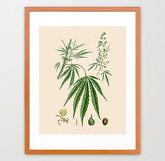 Marijuana Poster - Weed Art - Cannabis Poster - Cannabis Art - Marijuana Print…