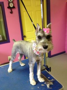 Doggie daycare and grooming