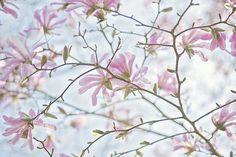 prettylittleflower:    Vintage Spring (by Jacky Parker Floral Art)