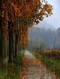 Download Animated 240x320 Autumn Rain Cell Phone Wallpaper Category Nature