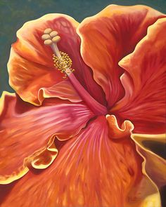 8x10 orange pink and yellow tropical hibiscus flower by Hawaiiart, $25.00