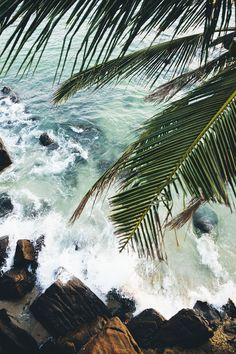 beach, photography, palm tree,