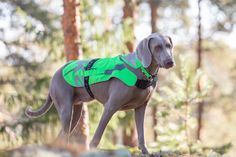 Flap Safety Vest - Spring / Summer 2017 by Rukka Pets