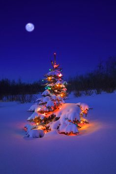 https://flic.kr/p/7MyCU | 42-15852890 | 27 May 2004, Alberta, Canada --- Glowing Christmas Tree in Snow --- Image by