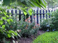Black picket fence - makes the green and color pop
