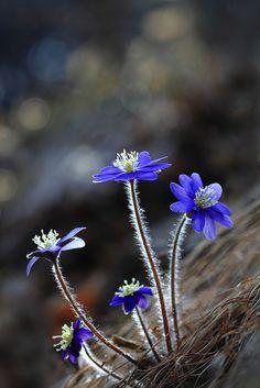 Purple wildflowers - Bokeh photography
