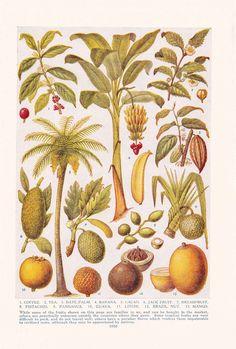1947 Botany Print via Etsy.