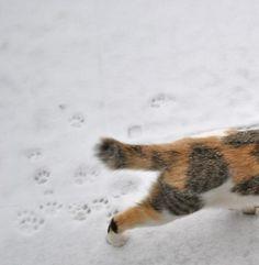 snow-cat37.jpg