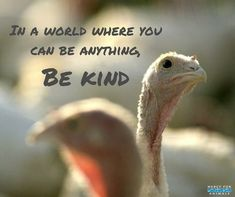 Be kind to turkeys, this could be a whole marketing campaign.