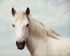 https://flic.kr/p/adwk2v | Equus