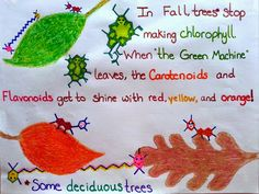 Introducing, The Science Of Fall! Starring: Chlorophyll, The Mighty Green Machine! It also has a lot to do with Carotenoids and Flavonoids, the Fall Color Molecules!  Learn the hows and whys behind Fall color changes, and do some really cool science experiments too!