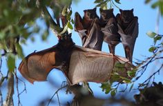 Dancing Bat by Paul Hinderer on 500px