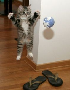 I've got the whole world in my paws - almost! #cats #kittens