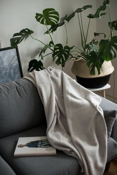 interior with white blanket and grey coch, black and white basket with monstera plant theadorabletwo